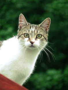 Cat - http://www.1pic4u.com/blog/2014/09/25/cat-51/