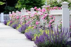 Flowers in front and through a white picket fence. Garden Spaces - traditional - landscape - other metro - dabah landscape designs. Chicago Landscape, Garden Shrubs, Garden Path, Garden Fencing, Easy Garden, Reed Fencing, Planting Shrubs, Potager Garden, Garden Steps
