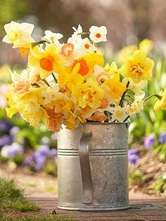 Celebrate the season with cheery, colorful—and Midwest-hardy—daffodils. Pictured: Daffodils in the watering can include 'Mission Impossible', 'Tahiti Mondragon', 'Red Hill', 'Sugarbush', 'Pops Legacy' and 'Pink Silk'.