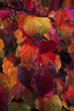 Stunningly beautiful colors of Autumn ~