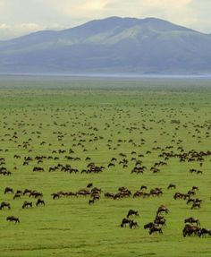 Serengeti National Park, Tanzania Would you like to see this ? Contact us www.cuttingedgesafaris.com