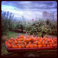 Instagram Photo:  Apple Orchard and Pumpkin Wagon at Hofacker's Hillside Orchard near Black Creek, WI. @Sheila Hansen- #webstagram