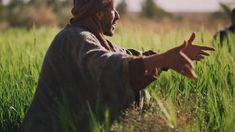 Jésus a dit que l'vrai poussera avec le blé, mais à la moisson l'ivraie sera séparée du blé et jetée dans le feu, tandis que...