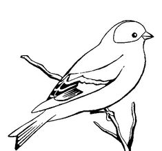 Wild Canary Bird Coloring Pages : Best Place to Color Bird Coloring Pages, Coloring Pages For Kids, Canary Birds, Online Coloring, Cool Art Drawings, Painting For Kids, Bird Art, Art Projects, Art Prints