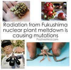 Fukushima Fallout Mutations