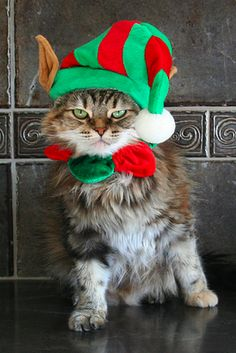 Elf Kitty is not impressed . . . with the way you dressed him ;-)