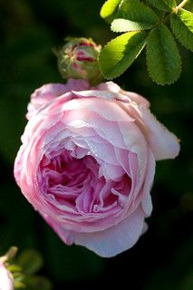 Belle Isis | by Carolyn Parker ☁️ ✿⊱╮♡ ✦ ❤️ ●❥❥●* ❤️ ॐ ☀️☀️☀️ ✿⊱✦★ ♥ ♡༺✿ ☾♡ ♥ ♫ La-la-la Bonne vie ♪ ♥❀ ♢♦ ♡ ❊ ** Have a Nice Day! ** ❊ ღ‿ ❀♥ ~ Tue 15th Sep 2015 ~ ~ ❤♡༻ ☆༺❀ .•` ✿⊱ ♡༻ ღ☀ᴀ ρᴇᴀcᴇғυʟ ρᴀʀᴀᴅısᴇ¸.•` ✿⊱╮