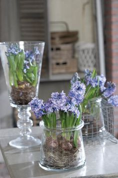 SODIAL Vase de Table en Verre Transparent Forme de lAmpoule pour Plantes Fleurs Decoration de Jardin Maison Mariage