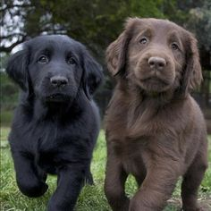 I had a pair of pups just like this when I was a kid, bubba and Barney <3