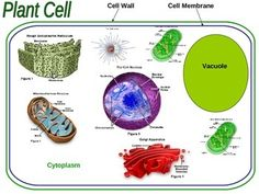 Animal Cell Color Page, Worksheet, and Quiz Ce-3 | Worksheets ...