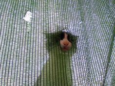 Pinto climbs on the tarpaulin and stares down at us like this