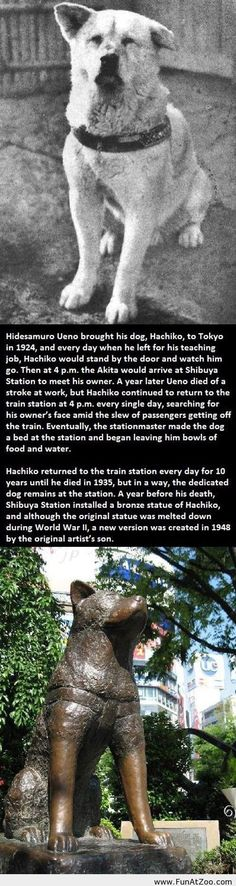 Hachiko the Faithful - how beautiful! Animals And Pets, Funny Animals, Cute Animals, Animal Fun, Hachiko Dog, Hachi A Dogs Tale, Worlds Funniest Pictures, Funny Images, Funny Pictures