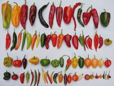 VARIETES PEPPERS | All the varieties of chili peppers                                                                                                                                                                                 More