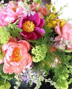 Peonies and ferns