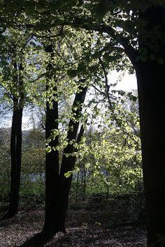 Waldeigen