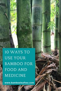 Learn how to use your bamboo and why you would want to. Bamboo has so many benefits and is available to many. Using it is an excellent way to improve your health. Bamboo Leaves, Improve Yourself, Medicine, Health, Health Care, Medical, Salud