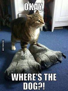 Ok where's the dog?