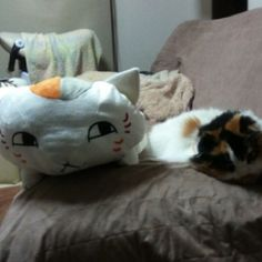 'Chibi' and 'NYANKO SENSEI' 2 #cat #neko