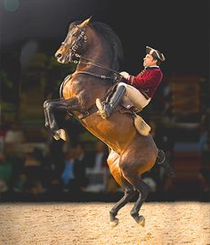 Gimnasia caballar. this is actually a rider from the school of riding in Portugal. doing a courbette.