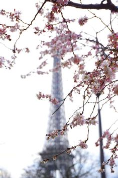 it's beginning to look a lot like springtime in paris