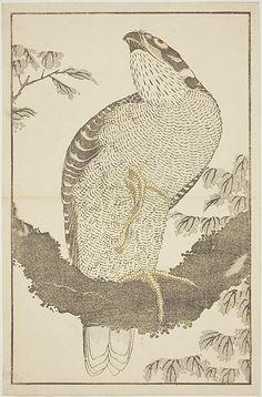 Katsushika Hokusai: Hawk, from The Picture Book of Realistic Paintings of Hokusai (Hokusai shashin gafu) - Art Institute of Chicago Japanese Artwork, Japanese Painting, Japanese Prints, Hawk Pictures, Japanese Bird, Katsushika Hokusai, Art Japonais, Realistic Paintings, Art Institute Of Chicago