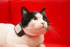 Dispositivo Sim con localizzatore GPS per animali Vodafone
