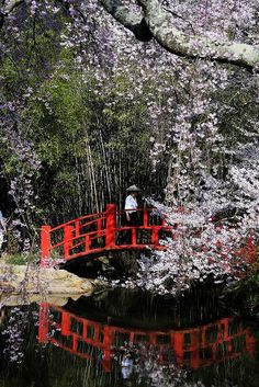 Japanese #garden decorating before and after #garden decorating #garden interior design