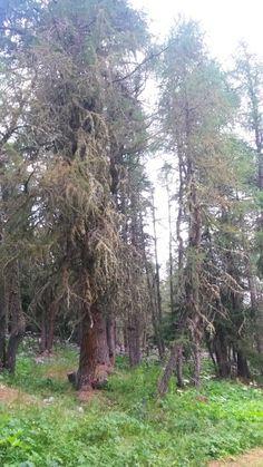 Auf dem Weg zum Lai da Palpuogna, Bergün / Preda, Albulapass