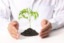 Agroforestales ESLA | Plantas de Pistacho y Almendro