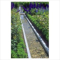 Water rill with Rosa and Delphiniums - Alnwick Castle