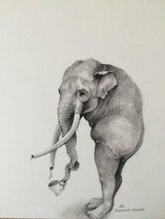 Elephant With Cup