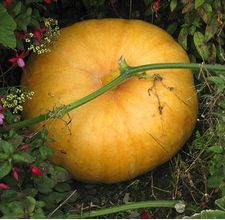 How to Start a Pumpkin Patch for you and your friends and family