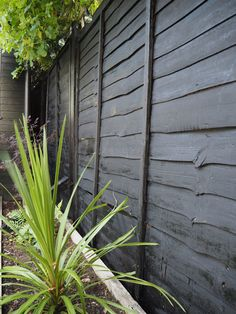 If In Doubt, Paint It Black.The Failsafe Way To Revive a Tired Garden Fence Or Shed — Gold is a Neutral - If In Doubt, Paint It Black…The Failsafe Way To Revive a Tired Garden Fence Or Shed — Gold is a Neutral Source by evgenybezrukov - Black Garden Fence, Garden Fence Paint, Garden Fencing, Outdoor Fencing, Grey Fences, Old Fences, Garden Landscape Design, Small Garden Design, Backyard Fences
