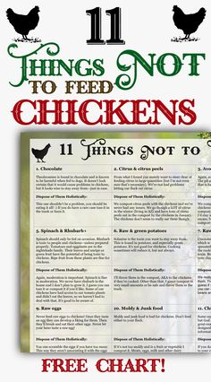 Learn which foods NOT to feed to your chickens with this free downloadable chart! Feeding and raising backyard chickens is easy, but beginners & advanced alike need to know which foods NOT to feed chickens.
