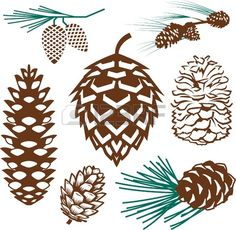 Pinecone Collection Stock Vector