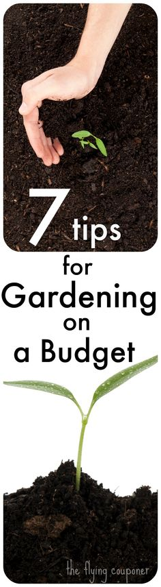 Check out my 7 tips for gardening on a budget. Early Spring and Summer Gardening Ideas and DIY Landscaping. The Flying Couponer | Family. Travel. Saving Money.
