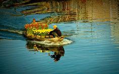 Aller au marché des fleurs Delta Du Mekong, Beautiful Vietnam, Vietnam Voyage, Photos, Asia, Amazing, Paisajes, Fruit Garden, Flowers