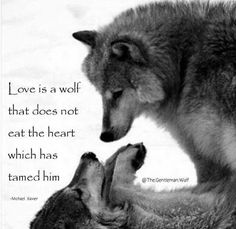 He eats other parts. Wolf Qoutes, Lone Wolf Quotes, Angst Quotes, Dog Quotes, Animal Quotes, Wise Quotes, Eagles, Funny Dog Jokes, Wolf Warriors