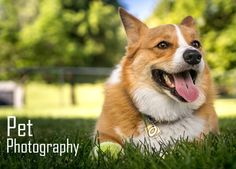 Pet Photography Tips from Frogman
