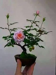 ★ Princessly Pink ★ https://www.facebook.com/jaison.sn/posts/1588186581417908