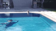 Pool scare