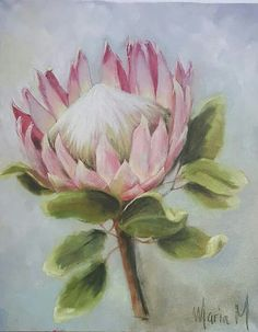 Pink King Protea Protea Art, Protea Flower, Acrylic Painting Flowers, Watercolor Flowers, Loom Flowers, Blue Flower Wallpaper, Australian Native Flowers, Floral Drawing, Art Drawings For Kids