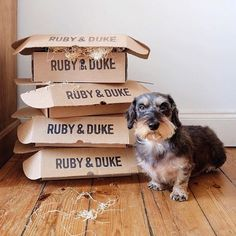It's Ruby & Duke #Dukebox #postiewatch time and our friend @theworldaccordingtoharris is looking forward to adding to his collection! It's on its way Harris!    www.rubyandduke.com  #dogsofinstagram #dogstagram #dogs #dogsrule #doglove #doglovers #doglife #dogoftheday #doggy #doglover #doggie #dogscorner #dogofinstagram #dogsofinsta #dogwalk #dog_features #doggies #dogsandpals #dogloversofinstagram #dogdays #dogsofinstaworld #dogcrushdaily #dogslover Dog Walking, Dog Toys, Dog Life, Duke, Doggies, Dog Lovers, Collection, Pet Dogs, Lap Dogs