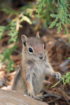 """Keeping a lookout for """"dropped food"""" near the camper store. Bryce Canyon National Park, Utah"""