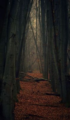 Autumn, The Enchanted Wood; background; October;