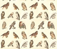 Owl Collage fabric by zephyrus_books on Spoonflower - custom fabric