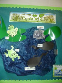 Life cycle of a frog from Maxine