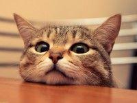 Funny Little Cat