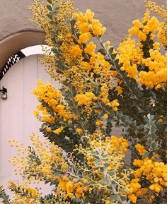 yellow aesthetic Grunge yellow things yellow Pants yellow paint flowers grunge Shades Of Yellow Color Names For Your Inspiration - Going To Tehran Flower Aesthetic, Aesthetic Grunge, Aesthetic Yellow, Aesthetic Vintage, Simple Aesthetic, Aesthetic Colors, Fred Instagram, Disney Instagram, Shades Of Yellow Color