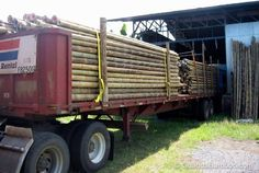 Wholesale Guadua bamboo poles from Colombia.